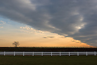 &quot;Geometree&quot;<br />