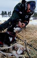 Vet Dennis Griffin Checks Harmony Kanavle's Dogs Koyuk