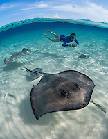 TR4066-D. Southern Stingray (Dasyatis americana) swimming over shallow sandy bottom while girl (model released) with underwater camera takes a picture. These rays grow to 6 feet wide, females are larger than males. They feed on fish, crabs, clams, shrimp, and worms. Grand Cayman, Cayman Islands, Caribbean Sea.<br /> Photo Copyright &copy; Brandon Cole. All rights reserved worldwide.  www.brandoncole.com