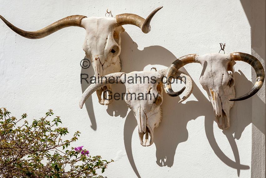 Spanien, Andalusien, Provinz Cádiz, Vejer de la Frontera: Stier, Totenschaedel | Spain, Andalusia, Province Cádiz, Vejer de la Frontera: bull skull