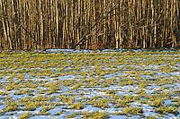 Høst møter vinter, Autumn meets winter Home decor,   Trond Are Berge Fine art photography, Limited editions