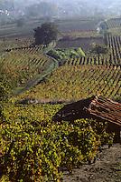 """Europe/France/Auvergne/63/Puy-de-Dôme/Chateaugay: Vignoble de Chateaugay """"Côtes d'Auvergne"""""""