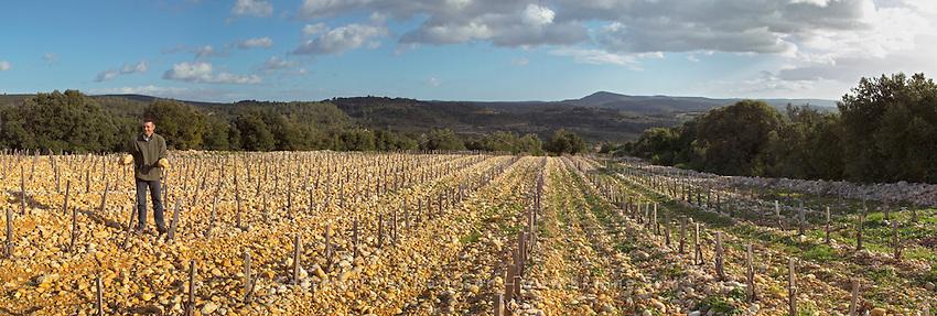 Frédéric Pourtalié of Domaine de Montcalmes in Puechabon in vineyards of Dom Saint Sylvestre. Terrasses de Larzac. Languedoc. Young Mourvedre grape vine variety. Terroir soil. Owner winemaker. France. Europe. Vineyard. Soil with stones rocks. Galets.