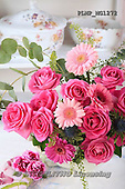 Marek, FLOWERS, BLUMEN, FLORES, photos+++++,PLMPMG1272,#f# roses