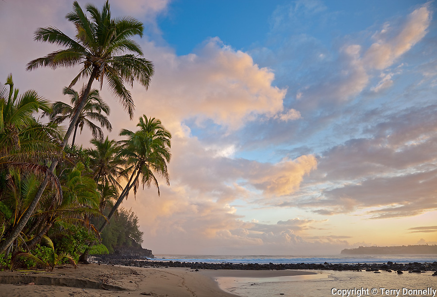 Kauai, HI<br /> Sunrise clouds and overhanging palm trees on Hanalei Bay near Makahoa point