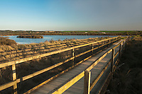 RSPB reserve at Titchwell, Norfolk, Uk