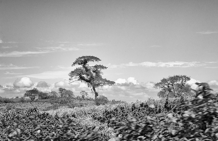 Black & White Fine art image Landscape