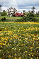 Spring wildflowers in the Ouachitas of western Arkansas.