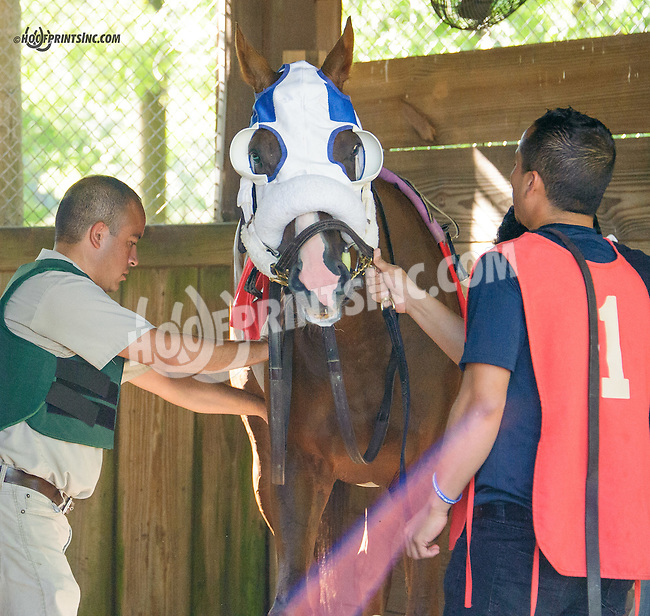 Juan saddling Isolation Road at Delaware Park on 9/23/15