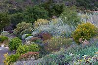 Backyard hillside border with drought tolerant, summer-dry shrubs and perennials, Schaff garden