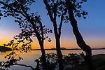 Saltspring Island, British Columbia:<br /> Pine trees silhouetted at dusk on Beaver Point with Swanson Channel in the background, Ruckle Provincial Park