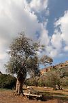 Israel, Carmel. Picnic area in Wadi Oren