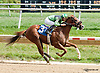 Run Tayler Run winning at Delaware Park on 9/5/13