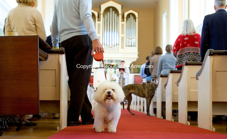 WASHINGTON, CT-08 OCTOBER 2006-100806JS01-Niki, an 11 year-old Bichon Frise owned by Margaret and Lester Edelman of Roxbury looks around the inside of the First Congregational Church in Washington on Sunday prior to the church's Blessing of the Animals.<br />  -Jim Shannon Republican-American