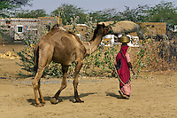 A BANJARI TRIBESWOMAN carries water and leads her CAMEL in her village in the THAR DESERT near JAISALMER - RAJASTHAN, INDIA