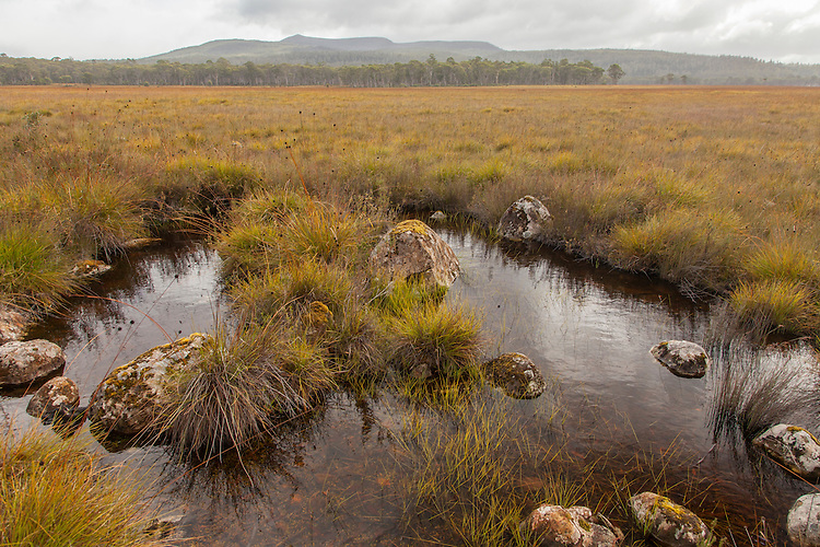 Button Grass Plains & Eucalypt Forests are found in Tasmania's interior northwest of Hobart