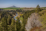Washington, Eastern, Steptoe. The Palouse River and Steptoe Butte on a spring afternoon.