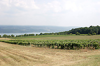FINGER LAKES VINEYARDS<br />