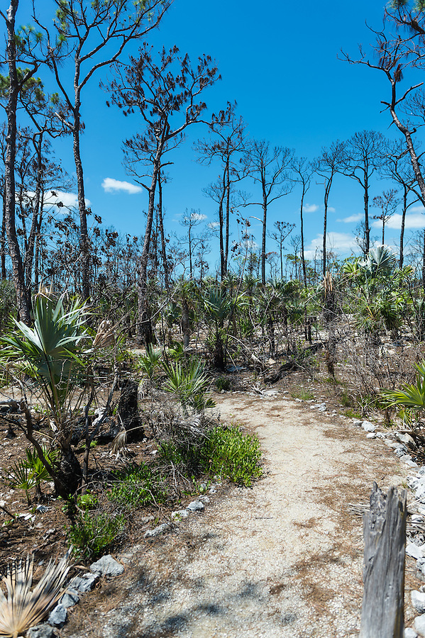 View of nature trail in the National Key Deer Refuge, in the Florida Keys