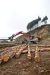 Nature Conservancy, Washington Chapter, Ellsworth Creek Preserve, forest restoration, forest thinning, blowdown prevention, log loader sorting timber, Emerald Edge Project, Willapa Bay, Pacific County, Washington Coast, Washington State, Pacific Northwest, United States,