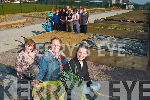 A LOT OF ALLOTMENTS: Residents in Shanakill/Rathoonane in Tralee setting friut and veg with their new allotments. Pictured were: Eileen Austin, Marion Moore and Bridget Murphy with other residents from both estates.