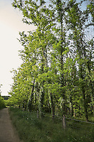 FOREST_LOCATION_90140