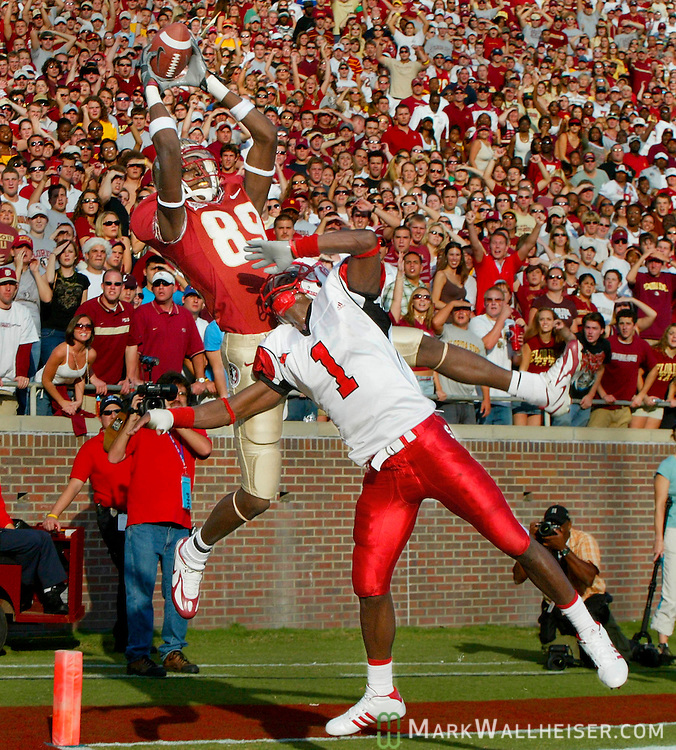 The Florida State student section is all eyes as their Seminoles leading receiving scorer Greg Carr (89) comes down out of bounds on this touchdown reception against North Carolina State's Marcus Hudson (1) in Tallahassee, Florida November 5, 2005.  the wolfpack of North Carolina State defeated the Florida State Seminoles 20-15.