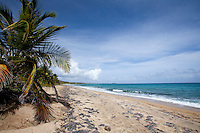 Playa Grande, strewn with seagrass and coconuts<br />