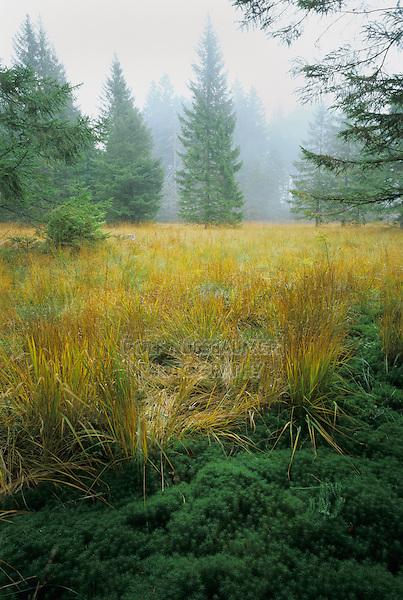 Sedge and moss close up, Unteraegeri, Zug, Switzerland