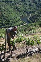 Europe/France/Midi-Pyrénées/12/Aveyron/Rouergue/Le Fel:  Laurent Mousset dans ses vignes [Autorisation : 2011-122]