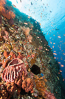 2012 September - Bali