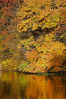 Autumn foliage and reflections, Twin Rivers, East Windsor, New Jersey, USA