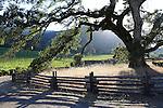 FB-BM21,  Beauty Ranch oak tree,  back photo for 2x7 bookmark,  Jack London State Historic Park