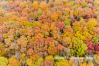 63876-02502 Aerial view of fall color trees Stephen A. Forbes State Park Marion Co. IL