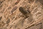 Phalus symbol in Pompeji, Italy