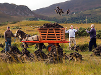 77 years old Kerry farmer Mick Teahan with friends John Mulvihill and Patie Courtney load up his turf from the bog at Ballycleave, Glenbeigh, County Kerry this week and hauls it out using the traditional Kerry bog pony. The Kerry Bog Pony is famed thoughout Ireland for his size and strength and the National show and sale will take place on Saturday October 18th at The Red Fox Inn, Glenbeigh when ponies from all over Ireland will be exhibited. There has been a resurgence of interest in the these small, sure-footed, versatile ponies which were used on family holdings in the mountains and valleys of Kerry for centuries. They were known locally as Hobbies. It is thought locally that this name may have been derived from a practice in Gaelic-speaking areas of calling &quot;Hup, Hup&quot; repeatedly to a pony to attract it home to the farmyard. The practice is known in Irish or Gaelic as obaireacht.<br /> Picture by Don MacMonagle