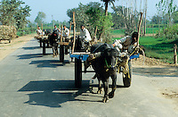 INDIA, Uttaranchal Pradesh, Khaddar, animal-powered transport, farmer with buffalo cart on the road / Indien, Bauern mit Bueffelkarren auf der Strasse