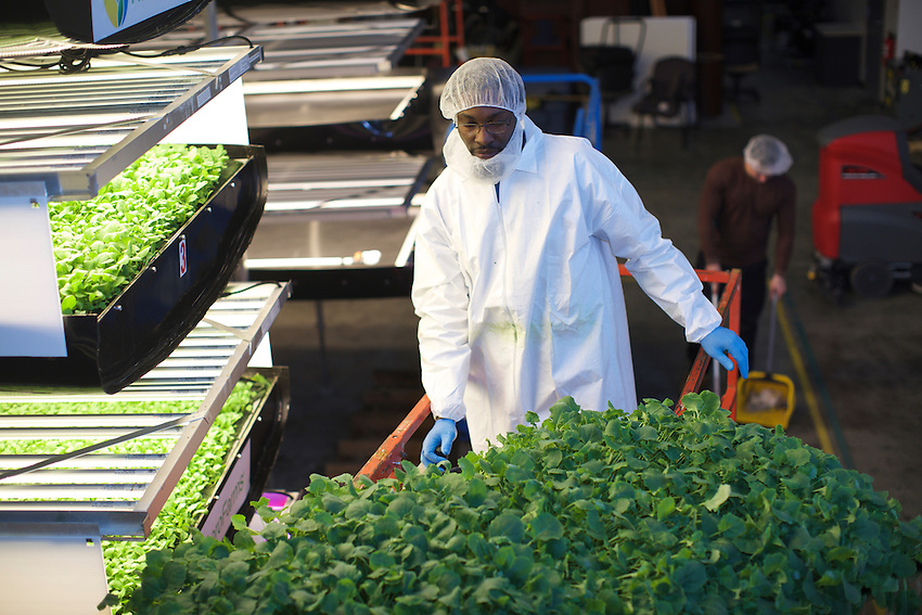 Newark, NJ - March 23, 2016: The warehouse-based hydroponic operation at AeroFarm.<br /> <br /> CREDIT: Clay Williams for Edible Jersey.<br /> <br /> &copy; Clay Williams / claywilliamsphoto.com