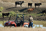 Cattle at a water hole on South Dakota ranch