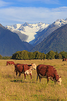 New Zealand South Island. west coast and Southern Alps 4-5star
