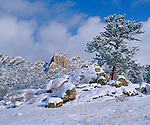 Newly fallen snow covers a ponderosa pine tree with the Twin Owls formation of Lumpy Ridge as a backdrop, in Estes Park, Colorado.