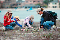 Mariner's Point, San Diego, CA, USA.  Saturday, December 13, 2008:  Kids Korps Volunteers from Point Loma's Explorer Elementary School; Sydney Fortune (2nd Grade), Ciara Gray (3rd Grade) and Shelby Fortune (K) work with Jana Fortune to clean up one of the last Least Tern nesting sites on Mission Bay.