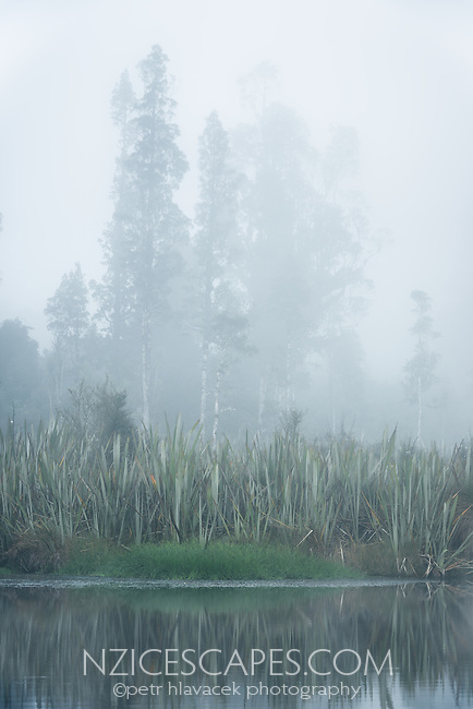 Native forest in morning fog with reflections at Lake Mapourika, West Coast, Westland Tai Poutini National Park, UNESCO World Heritage Area, South Westland, New Zealand, NZ