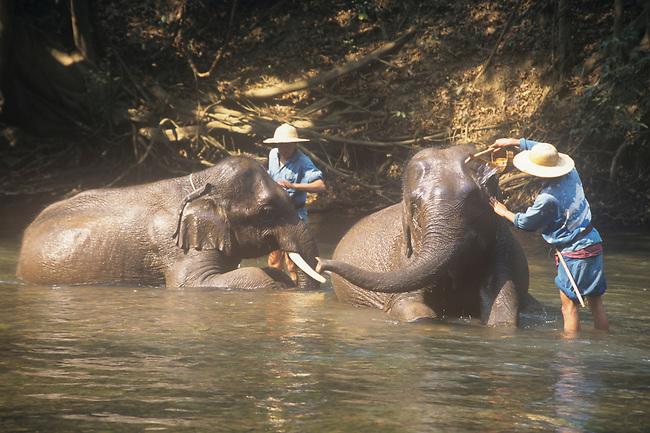 Washing Elephants, Chiang Dao Elephant Camp, Thailand