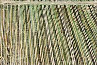 Farm field, Weld County, Colorado