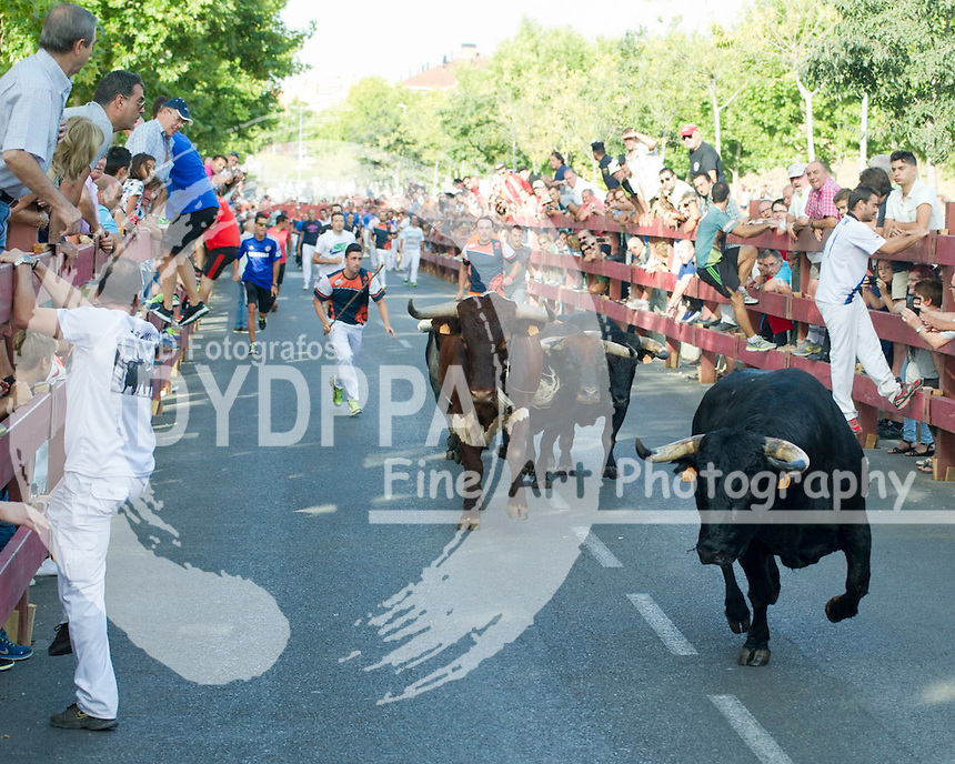 Running of the bulls of the fair of Alcala