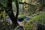 Silver Creek, Silver Falls State Park, Oregon
