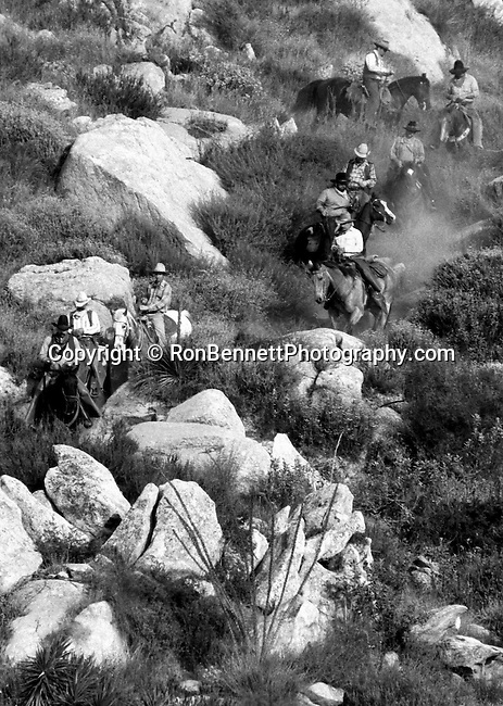 Cowboys work their way down a hill at roundup of cattle, Cowboys roundup California,roundup, cowboy, cowboys,  West Coast of US Golden State 31st State California, Fine Art Photography by Ron Bennett, Fine Art, Fine Art photography, Art Photography, Copyright RonBennettPhotography.com ©