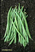 HS30-071x  Bean - pole bean - Kentucky Blue variety