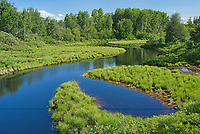 Meandering creek<br />
